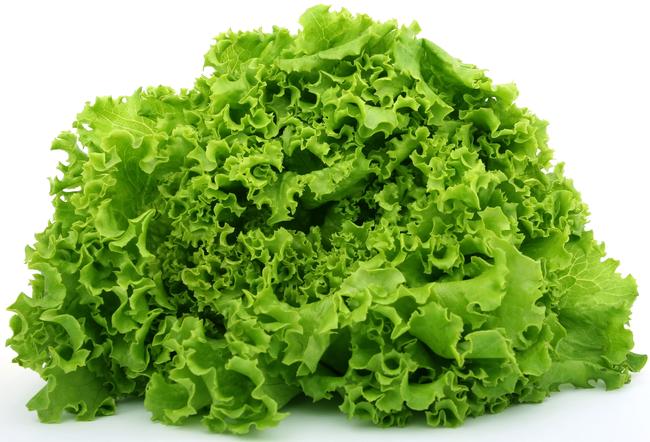 V Anglii, před mnoha lety, muži nejedli žádné saláty, protže si mysleli, že spůsobují sterilitu