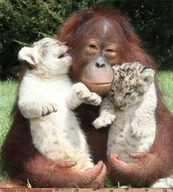 Přátelství z divočiny