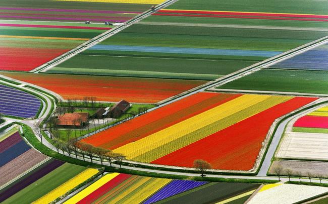 Tulipánové pole v Nizozemsku