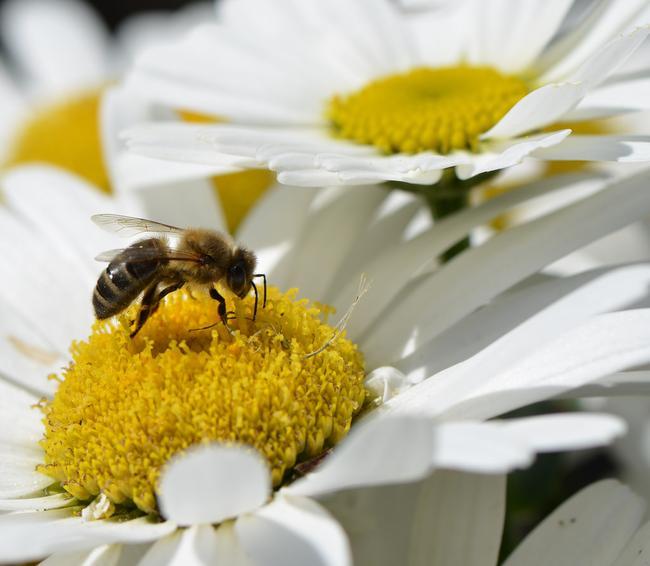 Včely mezi sebou komunikují prostřednictvím tance