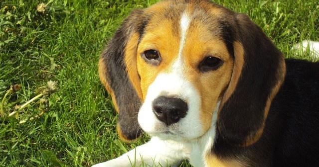 Co jste ještě nevěděli – jaká psí plemena jsou vhodná do rodiny?