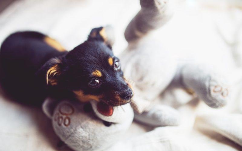 Některá plemena psů nejsou žádná výhra, i když tak na první pohled vypadají